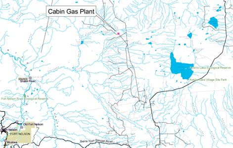 cabin plant